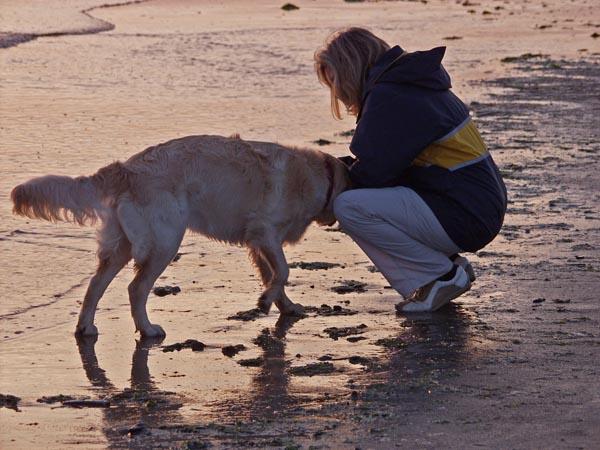 chien plage